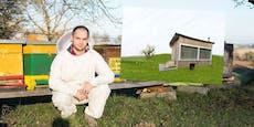 Imker (35) bietet Tiny House für Auszeit mit Bienen an