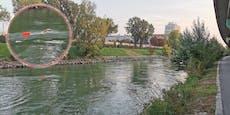 Wiener schwimmt trotz kaltem Wetter im Donaukanal