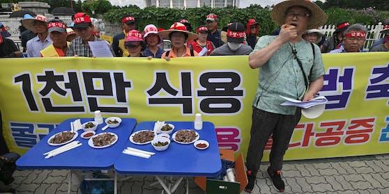 Eine Kundgebung von Hunde-Züchtern gegen Tierschutz-Proteste in Südkorea.