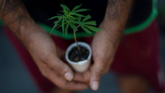 Eine 91-Jährige pflegte eine Cannabispflanze auf dem Balkon ihres Seniorenheims. (Symbolbild)