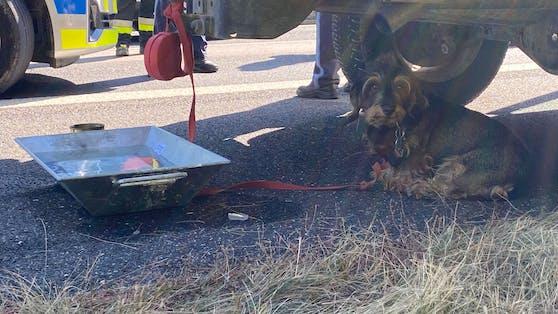 Die Feuerwehr versorgte den armen Hund mit dem Notwendigsten.