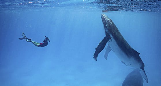 Ein Ehepaar aus Sidney hatte vor den Tonga-Inseln im Südpazifik ein unvergessliches Erlebnis.