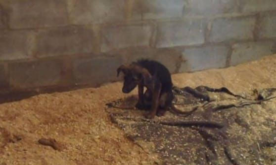 """Ein Häufchen Elend. Der kleine """"Simba"""" wollte nicht spielen und sollte deshalb eingeschläfert werden."""
