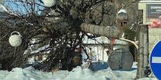 Kurioser Vandalenakt – Unbekannter sägt Bäume um