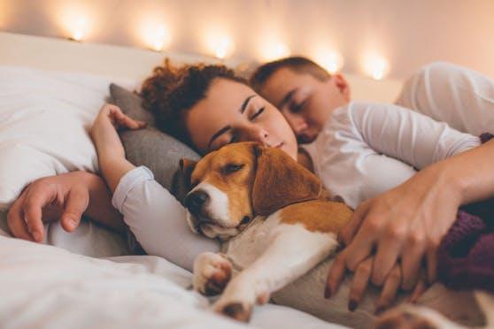 Eine Studie belegt nun, dass ein Hund im Bett die Schlaffähigkeit fördert.