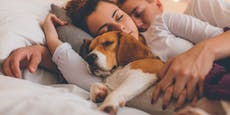 Ein Hund im Bett soll Schlaffähigkeit verbessern