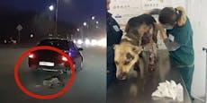 Video zeigt, wie Schäferhund mit Auto nachgezogen wird