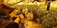 Todes-Raser gefasst – Flucht wegen Cannabiszucht?