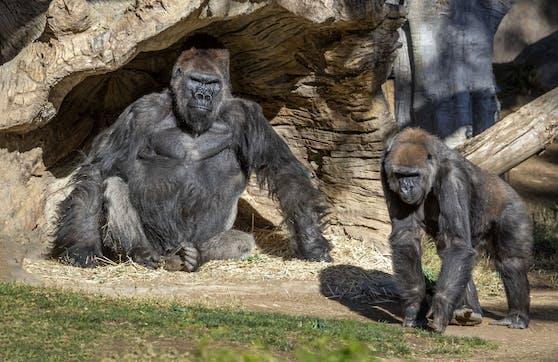 The Dian Fossey Gorilla Fund freut sich über jede Menge Spenden.