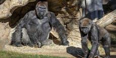 Jetzt adoptieren Reddit-Zocker massenhaft Affen