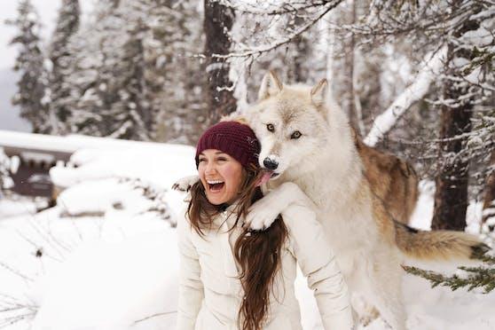 Fantastische Aufnahmen gelangen hier einer Gruppe von Fotografinnen im Northern Lights Wildlife Wolf Center in Kanada.