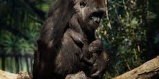 Zoo-Gorillas an Corona erkrankt