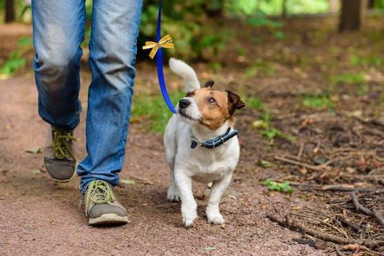 """Ein gelbes Band oder Halstuch am Hund heißt """"Abstand halten""""."""