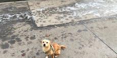Straßen völlig zugesalzen – Hunde leiden in Wien