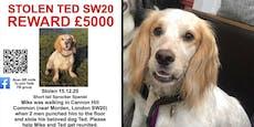Wo ist Ted? 5000 Pfund für Hinweise zu gestohlenem Hund