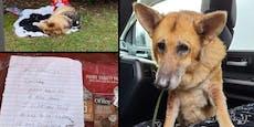 Hund vor Tierheim: Der Brief trifft mitten ins Herz