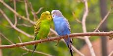 """Nach Liebesverbot wird wieder ge""""vögelt"""""""