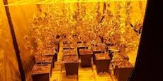 Polizei klopft an Tür, entdeckt Hanfplantage in Wohnung