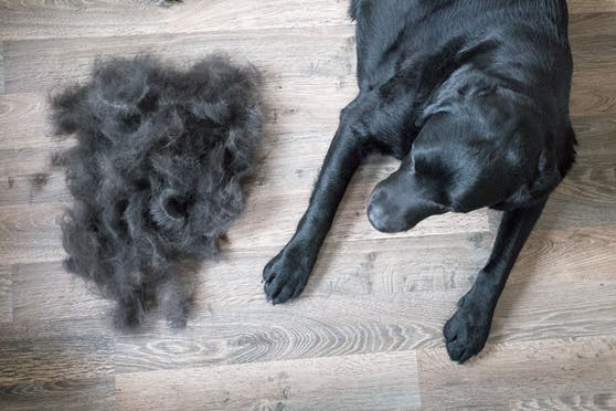 Die Unterwolle eines Hundes ist eine kaum genutzte Ressource!