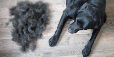 Hundehaare nicht wegwerfen! Einsenden und Gutes tun