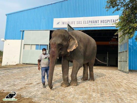 """""""Emma"""" wurde ihr halbes Leben als Prozessionselefant in Indien missbraucht"""