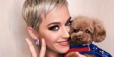 Shitstorm! Katy Perry ernährt ihren Hund vegan