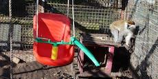 Horror-Zoo endlich von Veterinäramt geschlossen