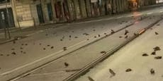 In Rom fallen tote Vögel vom Himmel - das ist der Grund