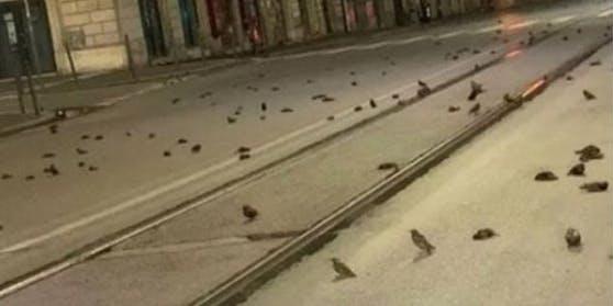 Hunderte toteVögel auf den Straßen Roms nach dem Silvesterfeuerwerk