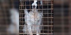 """Hundesenior wurde einfach in Zwinger im Wald """"entsorgt"""""""