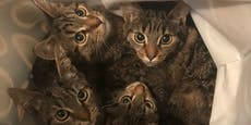 Eiskalt! Fünf Jungkatzen in Plastiksackerl ausgesetzt