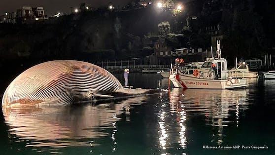 Das Tier hat eine Länge von 23 Metern und gilt als der je größte tote Wal der je im Mittelmeer entdeckt wurde.