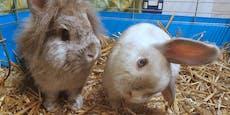 """Acht Kaninchen in Not! """"Franzl"""" kann nur schief schauen"""