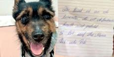Hund mit trauriger Botschaft mitten in Wien ausgesetzt