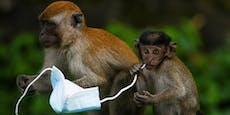 Tiere ersticken an Bändern von weggeworfenen Masken