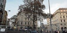 Baum fährt ab! Umzug rettet Platane vor U-Bahnbaustelle