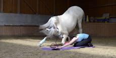 Zum Wiehern! So geht Pferde-Yoga