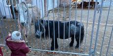 Abwechslung für Kinder beim gestrandeten Zirkus Safari