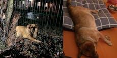 "Hunde-Omi ""Waltraud"" verstarb im Tierheim"