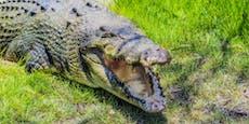 Krokodil will Mann töten, aber erlebt böse Überraschung
