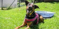 Hund aus Tierheim erstochen - das Urteil erschüttert