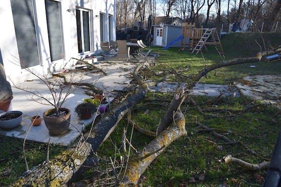 Der Baum lag mitten im Garten, dort wo sonst Kinder spielen.