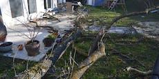 Baum krachte in Garten von Familie