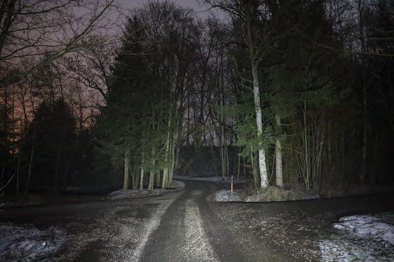 In diesem Wald in St. Marienkirchen wurde die Frau von einem Baum getroffen.