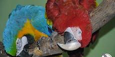 180 Papageien aus Vösendorf verlieren ihr Zuhause