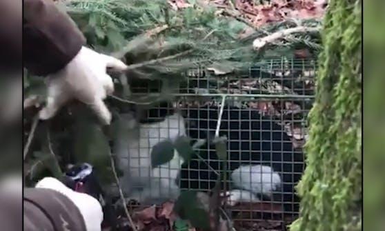 Todesqualen musste die arme Katze durch eine Jägerin erleiden.
