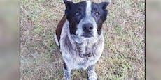 Blinder Hund findet verschwundenes Mädchen