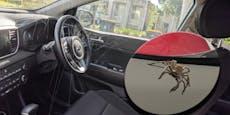 """""""Pfui Spinne""""! Der blanke Horror im Wagen"""