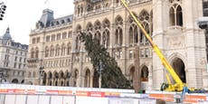 Baum baba! Hier fällt der Wiener Weihnachtsbaum 2020