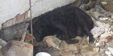 Hilfe aus NÖ für tierische Erdbebenopfer in Kroatien